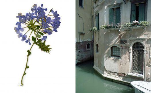 Work from Anita Kwiecien's 'Venezia é una città verde'